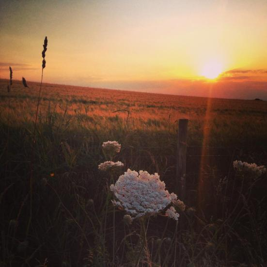 SunsetSurrey